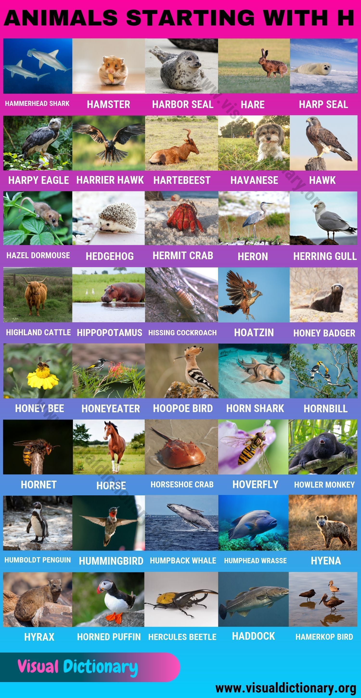 Animals That Start With H 40 Intriguing Animals Starting With H Visual Dictionary Em 2020 Vocabulario Expressoes
