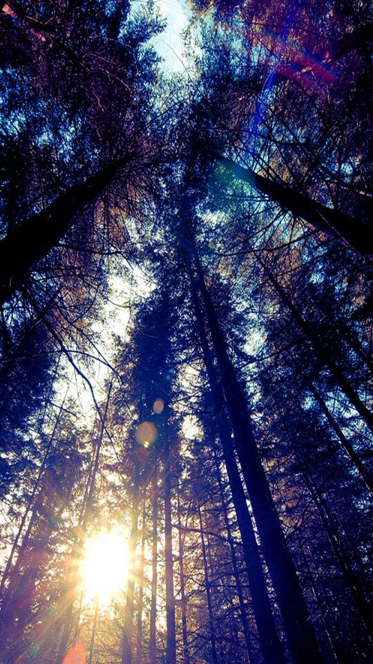 Lucky Star Cute Wallpaper This Is Really Pretty Beauty Of Trees Pinterest