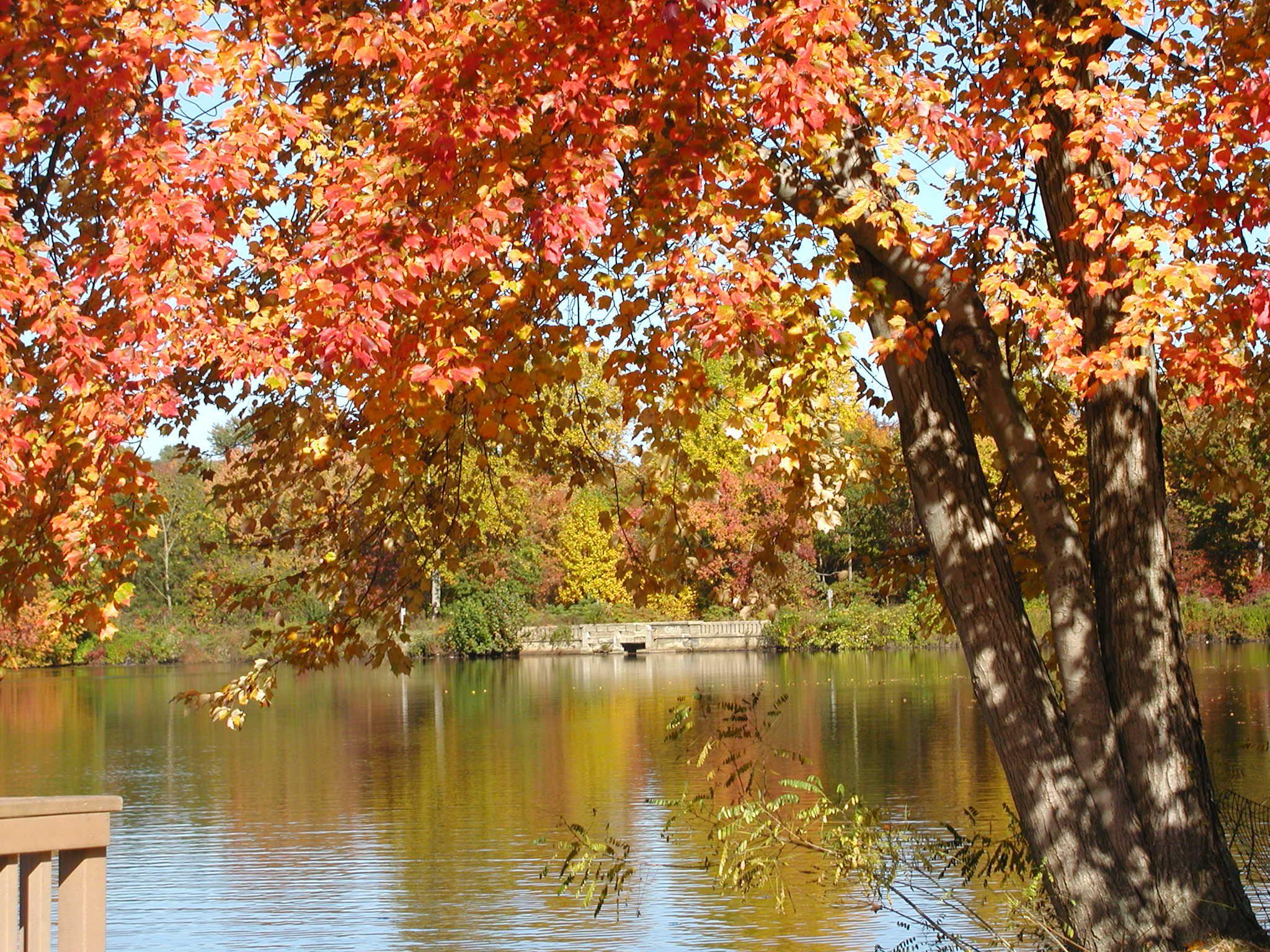 Autumn at bells lake in greenwood park turnersville nj