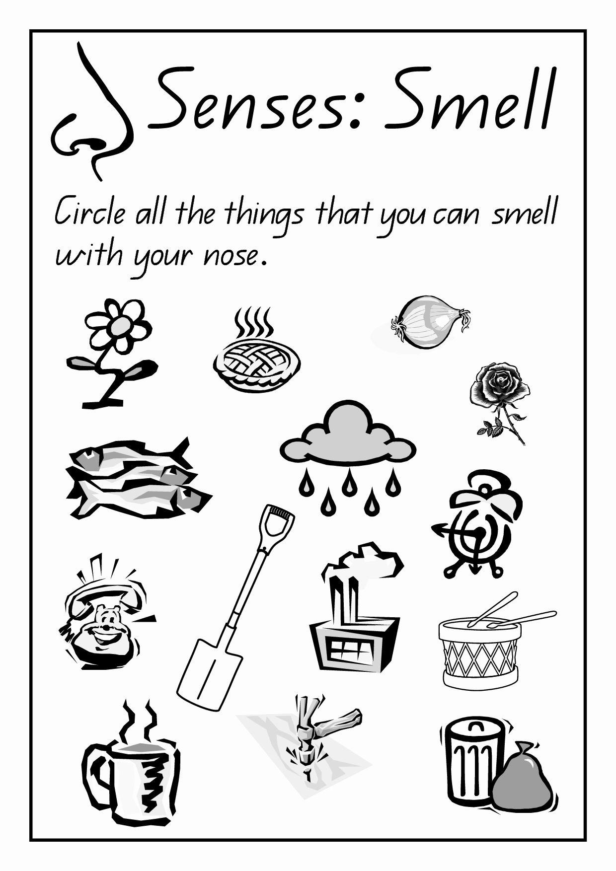 Preschool Worksheets Five Senses In