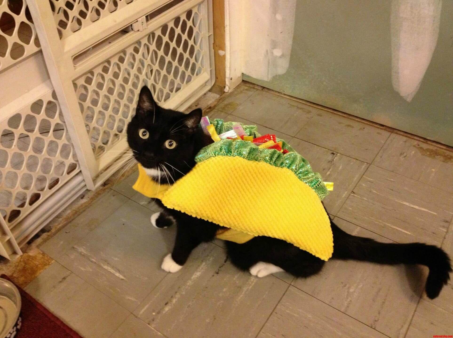 Best Cat Halloween Costumes Halloween Costumes Blog Taco Cat Costume Cat Halloween Costume Taco Cat