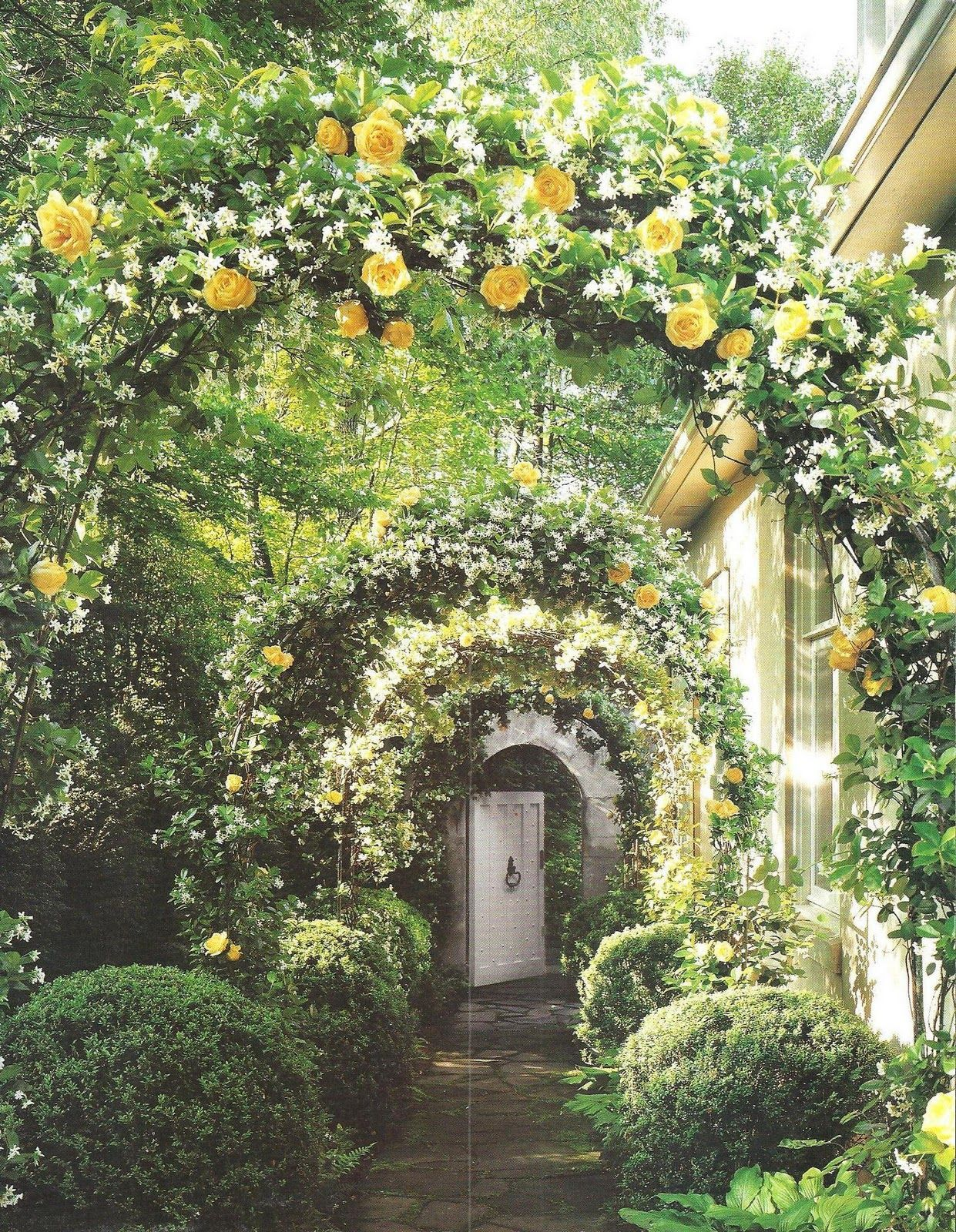 Rose and jasmine arbors over hanging a garden path to the open white rose and jasmine arbors over hanging a garden path to the open white door izmirmasajfo