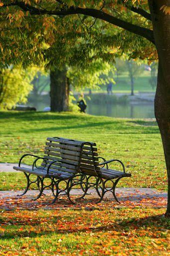 Scenic Benches Found On Rosemarywashington WordPress Com Nature Photography Scenery Beautiful Nature Garden romantic park bench background