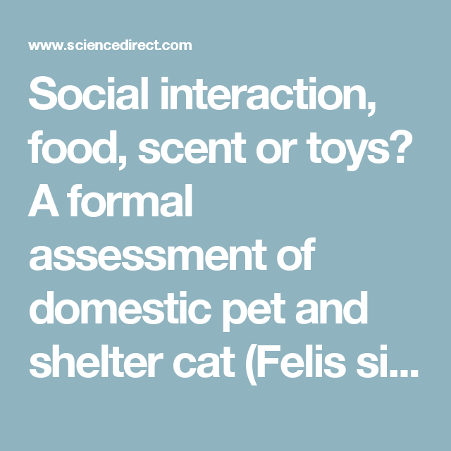 Social Interaction Food Scent Or Toys A Formal Assessment Of