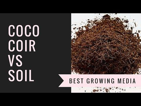Coco Coir Vs Soil | How to Choose your Growing Media - YouTube