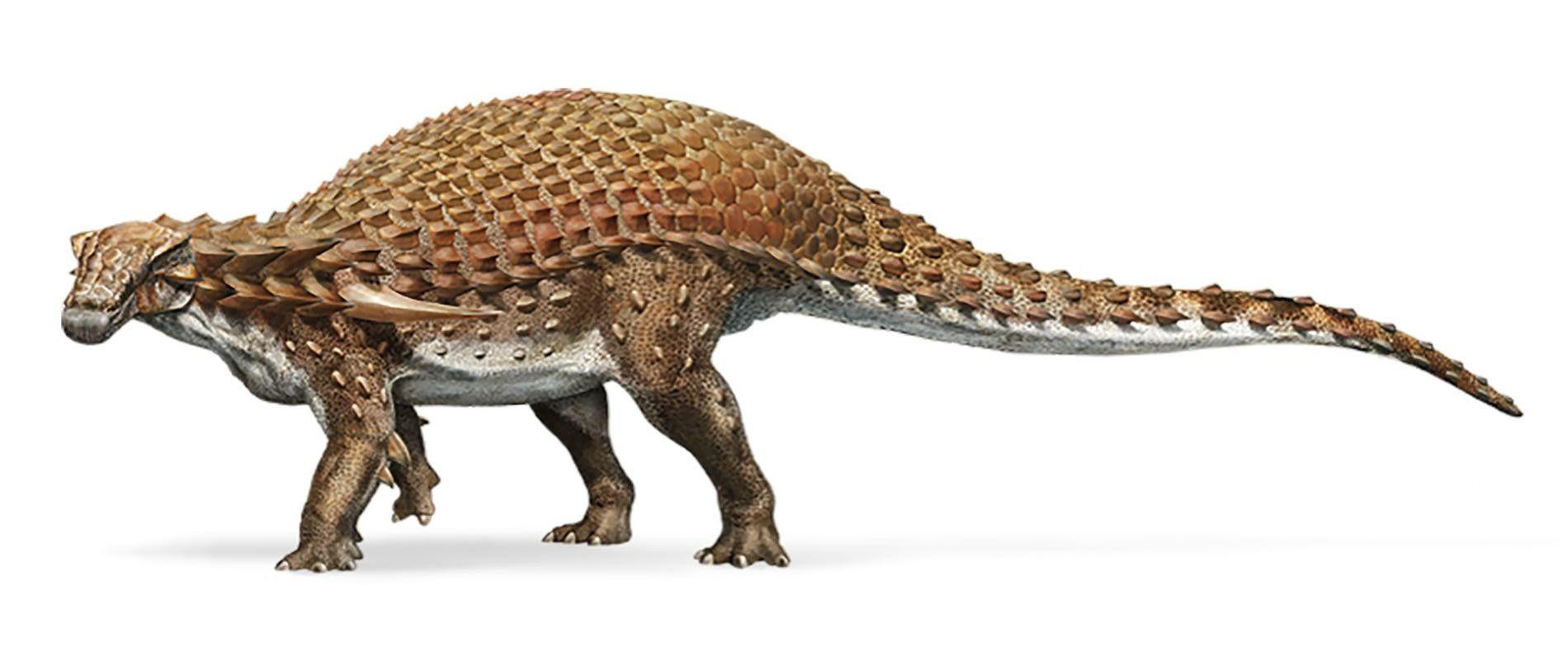 史上最高の保存状態の化石 カナダで発見されたノドサウルスの化石