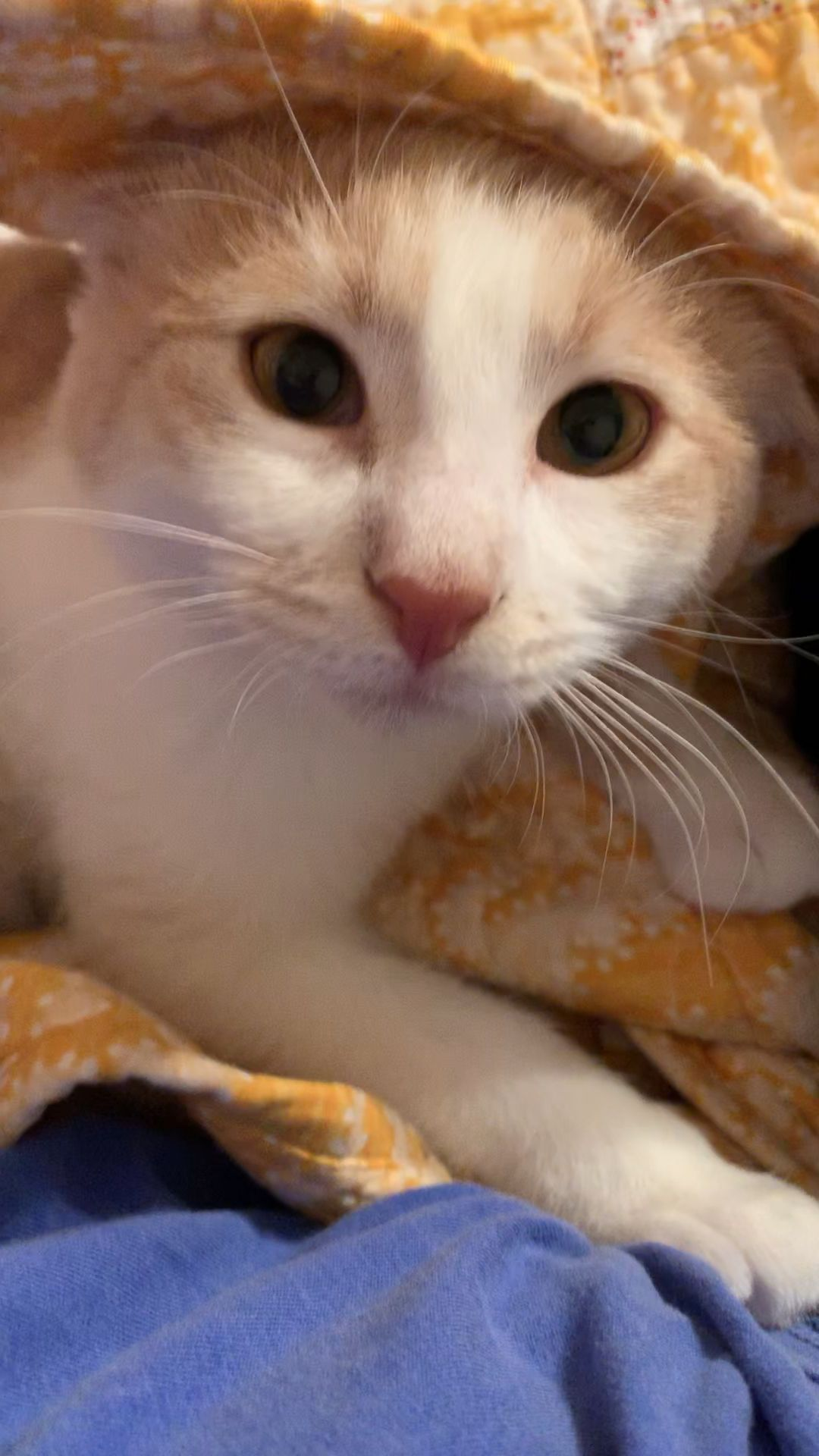 Pin By Jade Nunes On Gatitos In 2020 Cute Cat Gif Cute Animal Photos Baby Animals