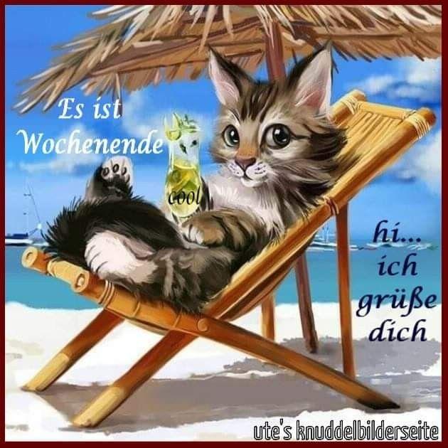 Wochenende Mit Bildern Katzen Lustige Spruche Wochenende