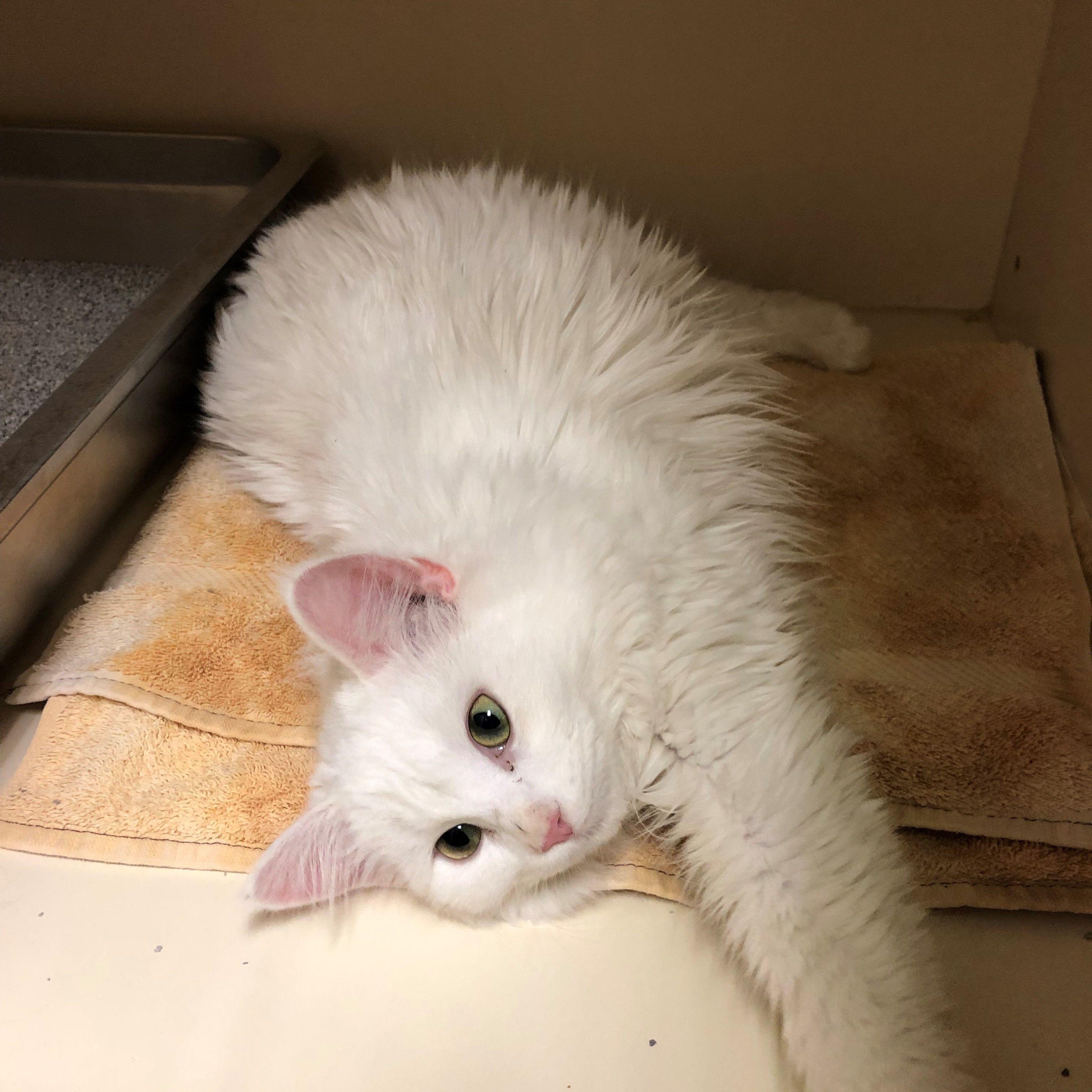 J Crew Cat Adoption Cat Rescue Cats