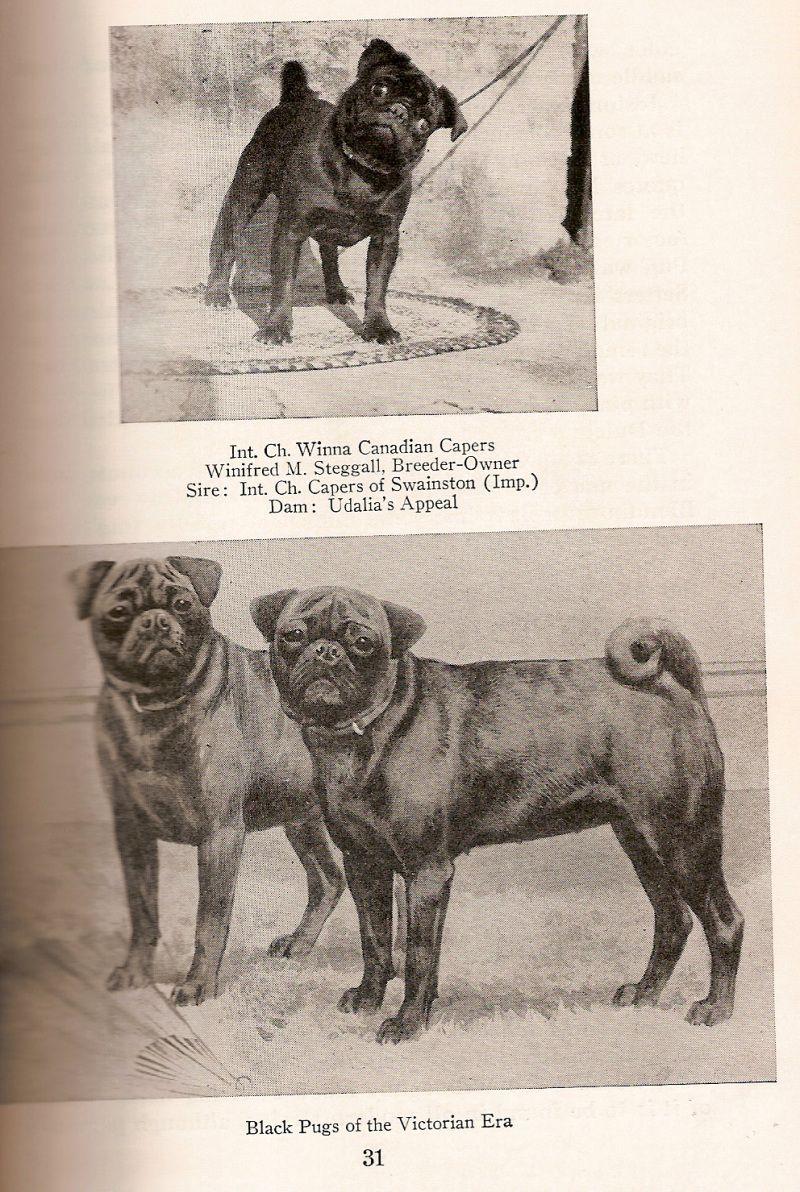 Pugs In History Swainstondam Udalia S Appealbottom