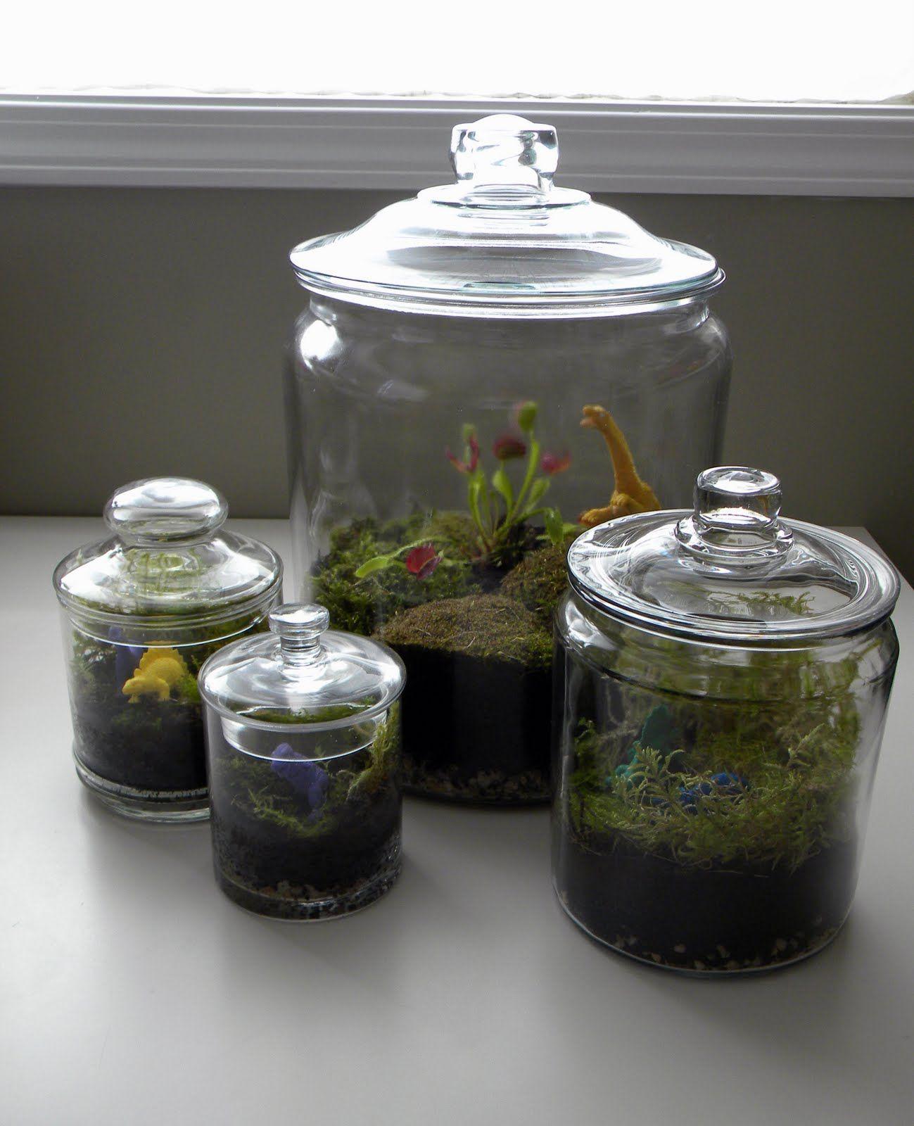 Venus Fly Trap Inside Glass Cookie Jar Garden And Plants Venus