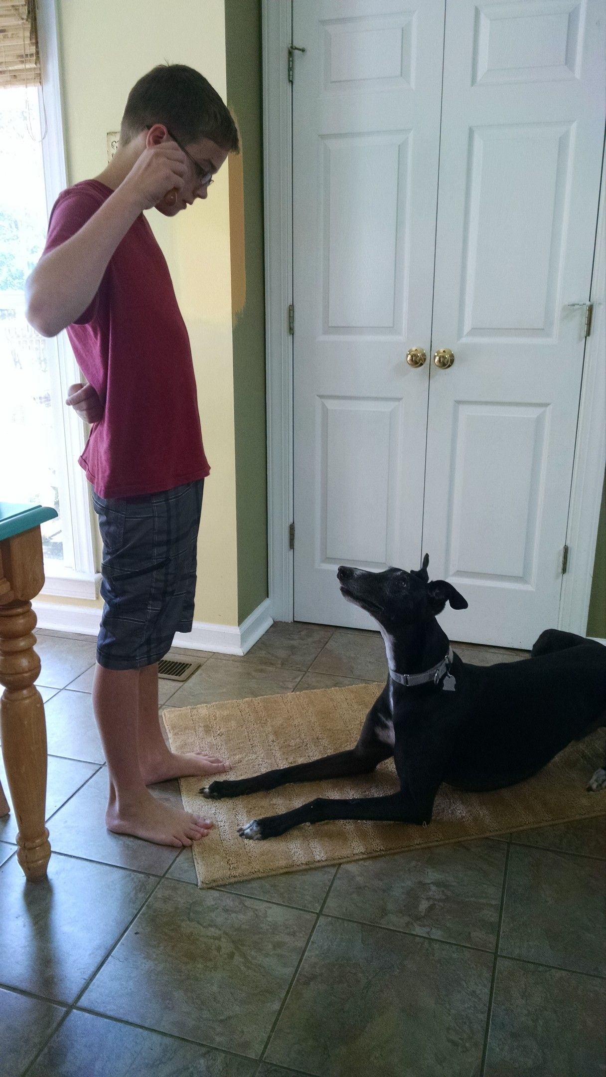How to teach a dog to sit from down position basic dog