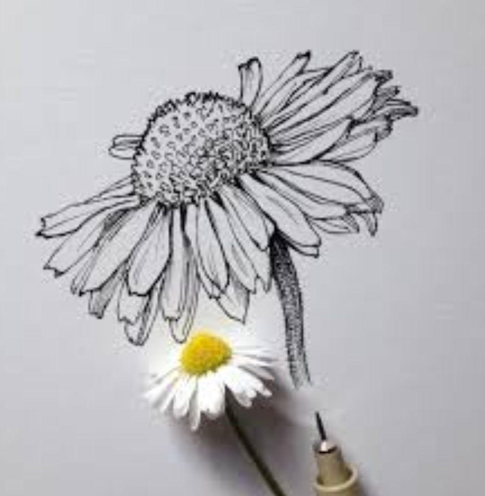 Realistic Daisy Drawing Art In 2018 Pinterest Drawings Art