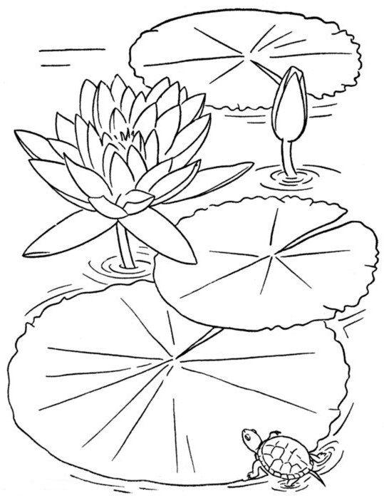 трафареты цветов   Рисунки для раскрашивания, Книга цветы ...