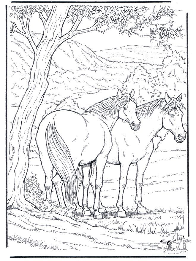 Free Coloring Pages for Adults | Animals coloring pages / Horses ...