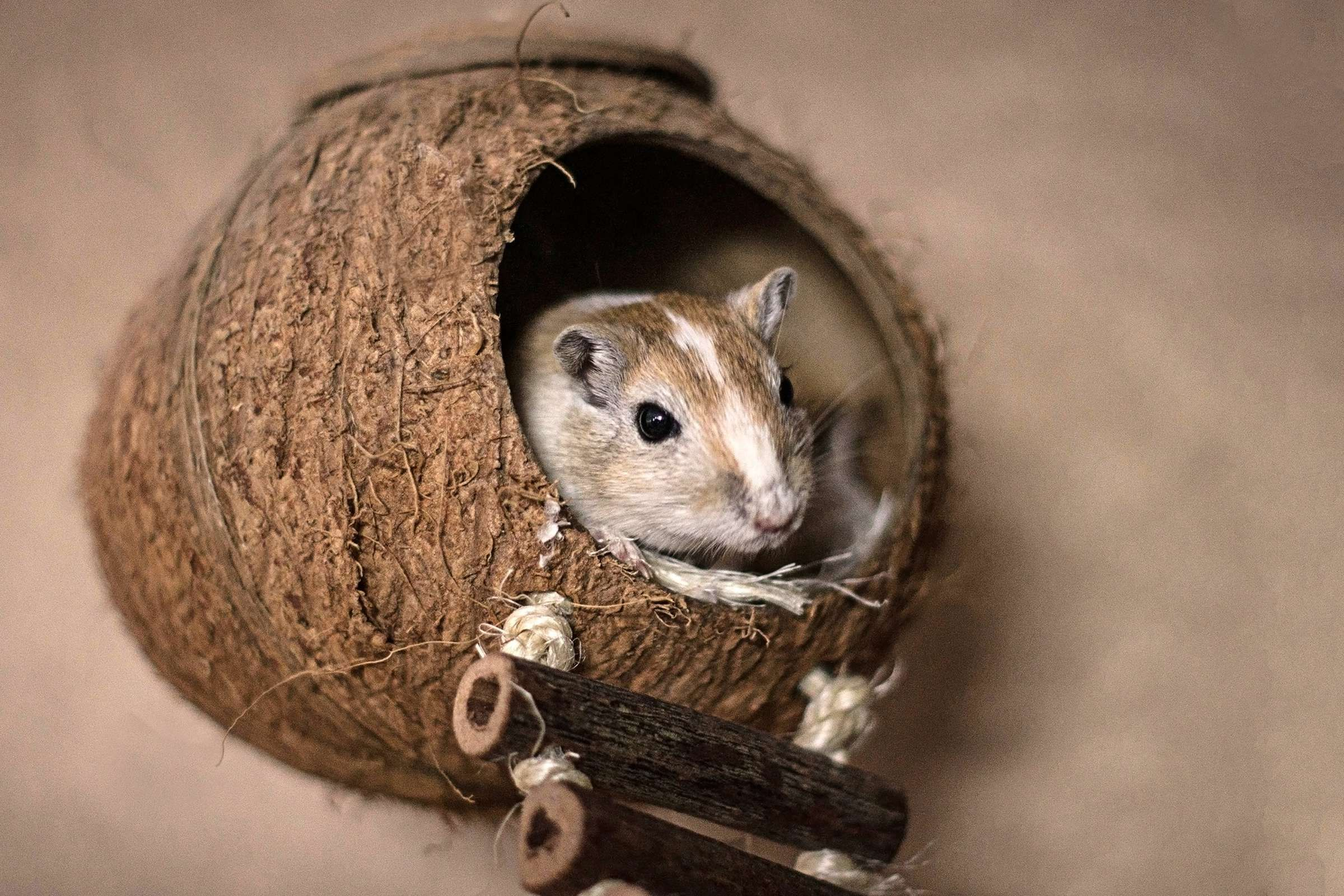 Kokosnussschiff Susse Tiere Rennmaus Hamster Spielzeug