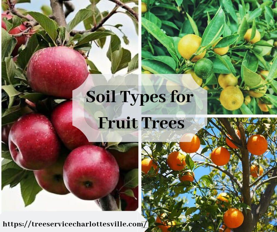 Soil Types For Fruit Trees Types Of Soil Fruit Trees Prune Fruit