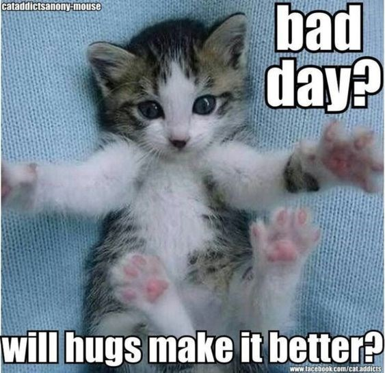 20 Adorable Kittens That Just Want To Make You Smile (Memes) #adorablekittens