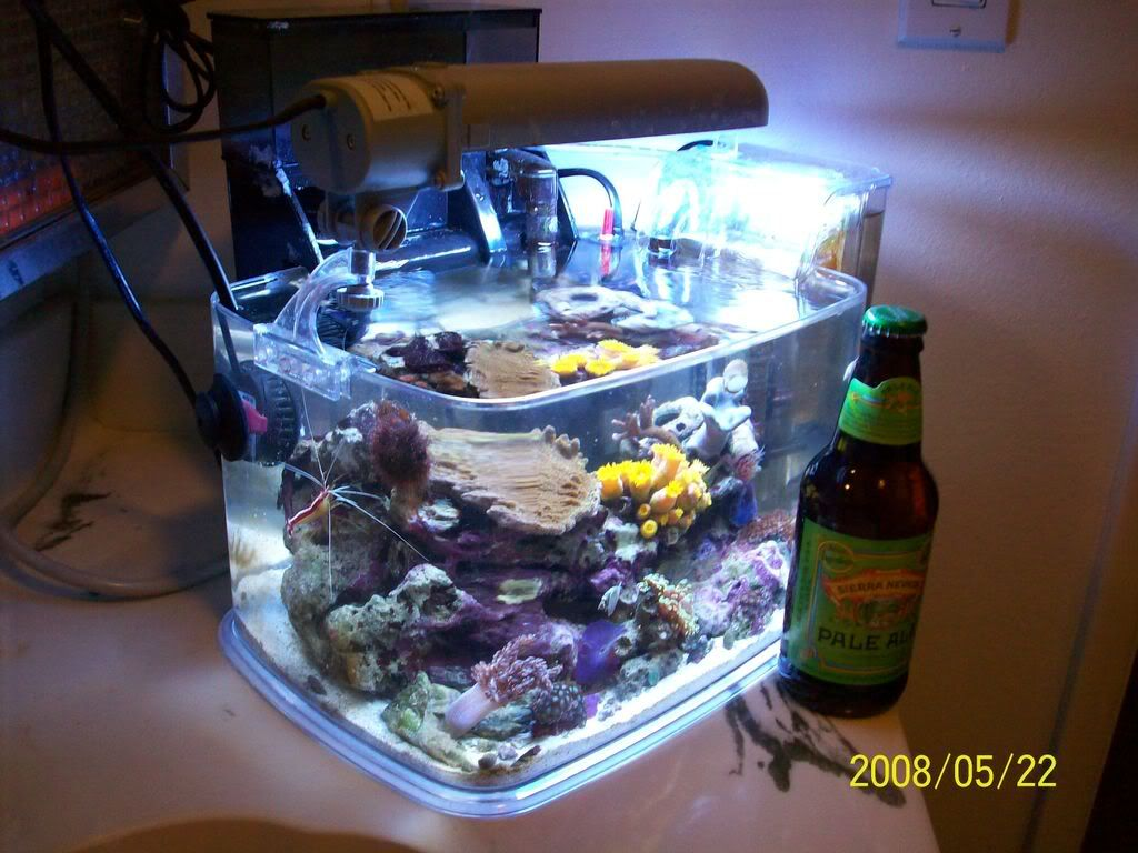 3 gallon micro nano reef tank swim with the fishes for Micro fish tank
