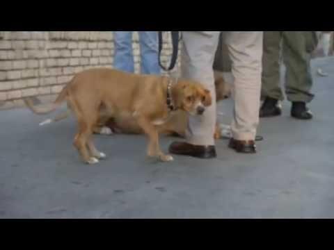Cesar Millan   Hyperactive dogs 1 - YouTube