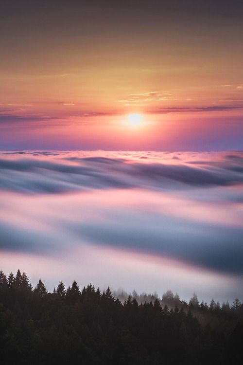 """banshy: """" Mount Tamalpais State Park // Jude Allen """""""