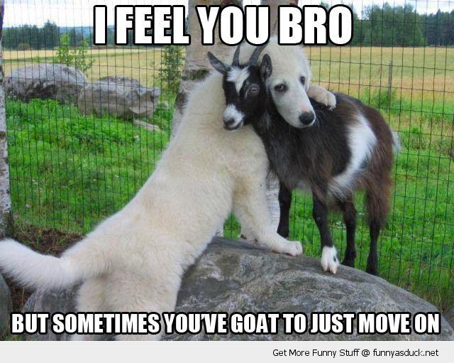 I Feel You Bro Dogs Hugging Animals Friendship Animals Friends