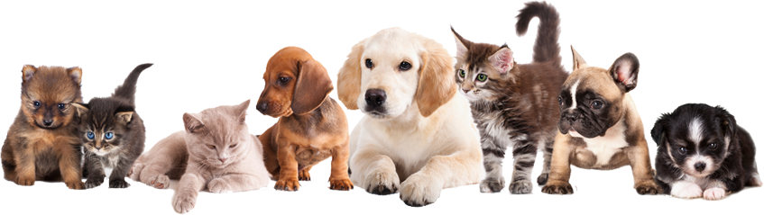 Pet Sky Online Is An Online Pet Store Which Allows The Users To