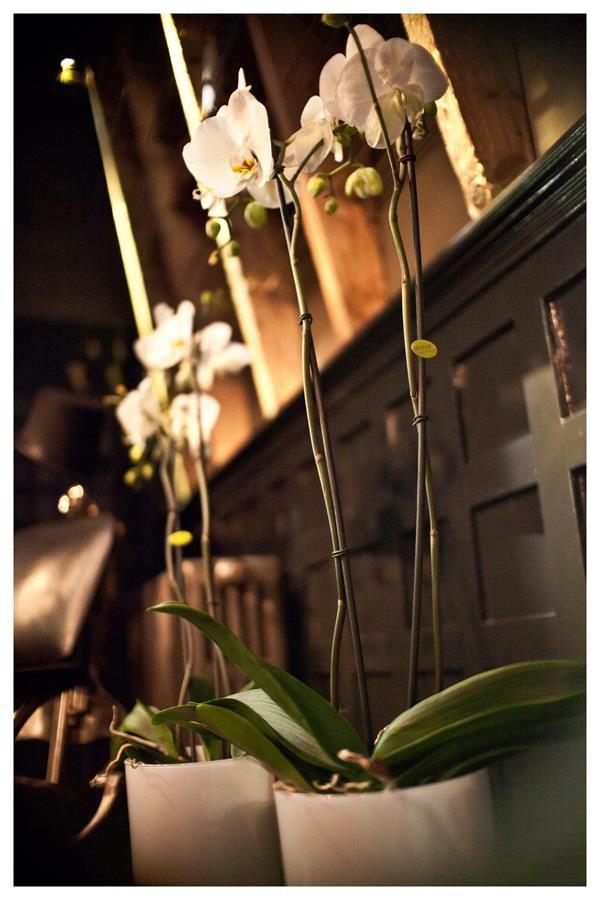 Bijoux Diamond #Opti-flor #Phalaenopsis
