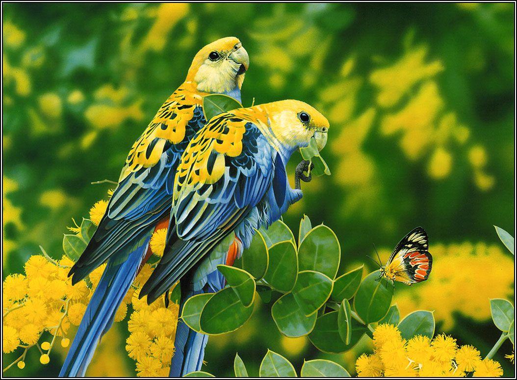 beautiful birds images | 15 beautiful birds latest hd wallpapers