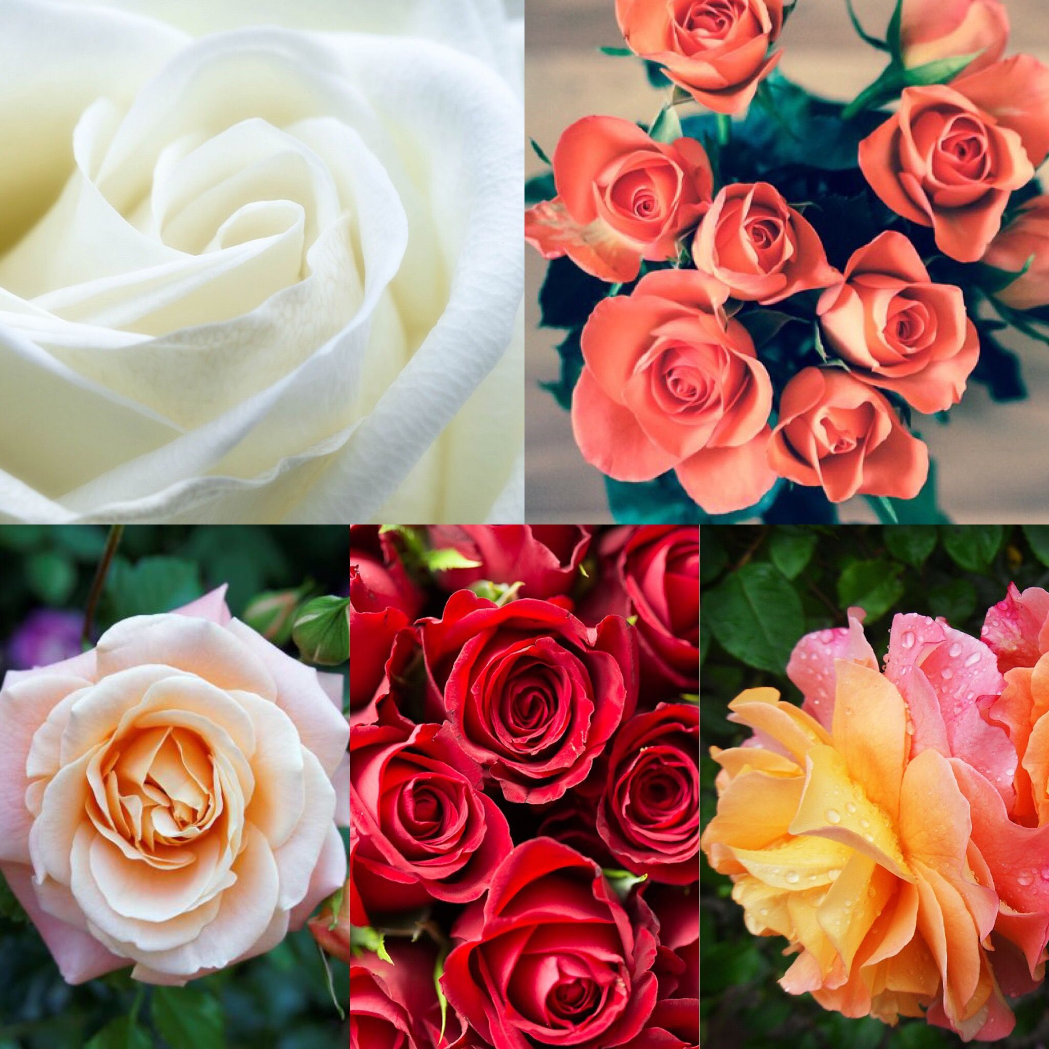 Roses Planting Growing And Pruning In 2020 Types Of Roses Garden Whimsy Organic Gardening Tips