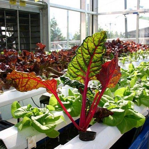 How To Build An Indoor Hydroponic Vegetable Garden 400 x 300