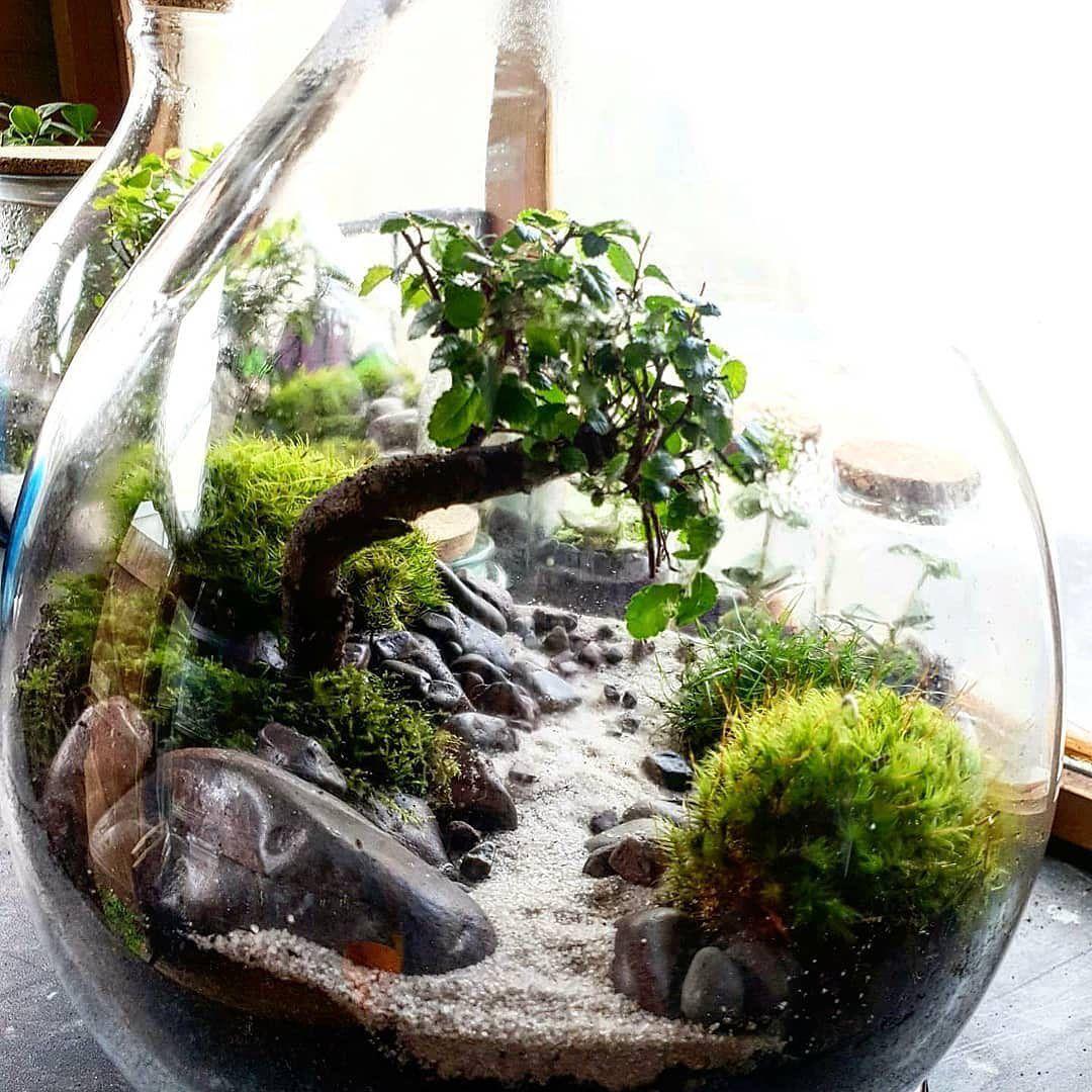 Terrarium Imaginarium On Instagram Beautifully Scaled Mini Scene With Moss And Bonsai Tree By Terraficuk From The United K Moss Terrarium Bonsai Bonsai Tree