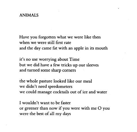 Frank Ohara Animals 1950 From The Collected Poems Of
