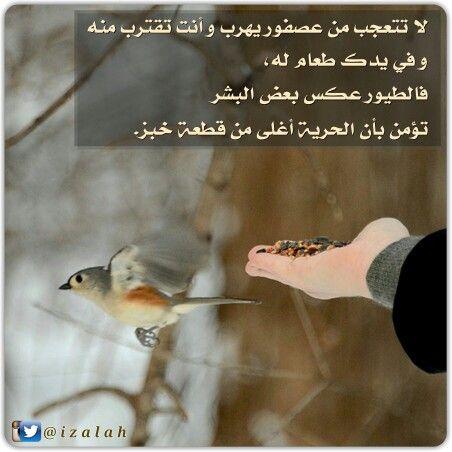 لا تتعجب من عصفور يهرب و أنت تقترب منه و في يدك طعام له فالطيور عكس بعض البشر تؤمن بأن الحرية أغلى من قطعة خبز