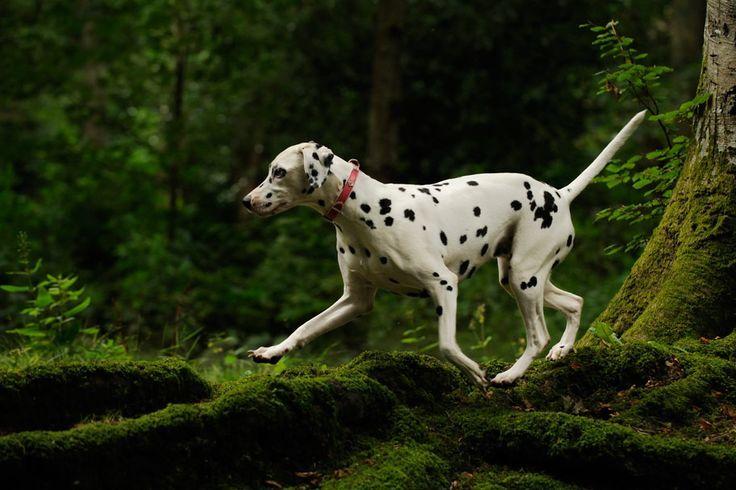 Pet Photography Gallery Dog Photographer, Ayrshire