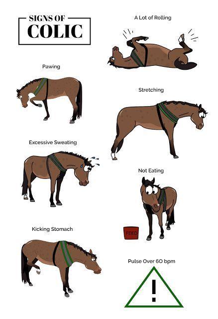 Your Horse's Lumps & Bumps