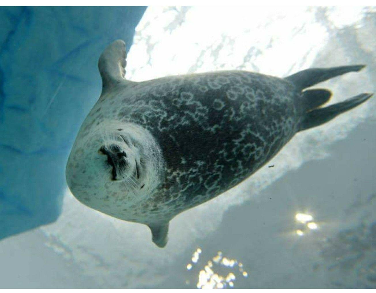 Pin by Rebekkah Sprague on Quazar Arctic animals, Arctic