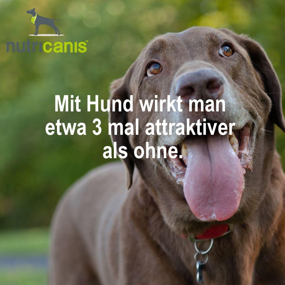 Mit Hund Wirkt Man Etwa 3 Mal Attraktiver Als Ohne Hund Getreidefreies Hundefutter Gesundes Hundefutter Hunde