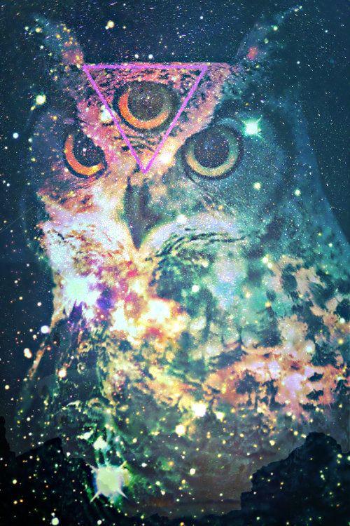owls / we heart it - Google Search