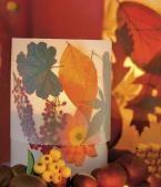 Deko mit buntem Herbstlaub: Für lauschige Stunden   Living at Home