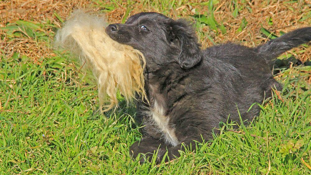Trainieren Statt Dominieren Die Wilden 5 Minuten In 2020 Hunde Korpersprache Hund Malen Hunde