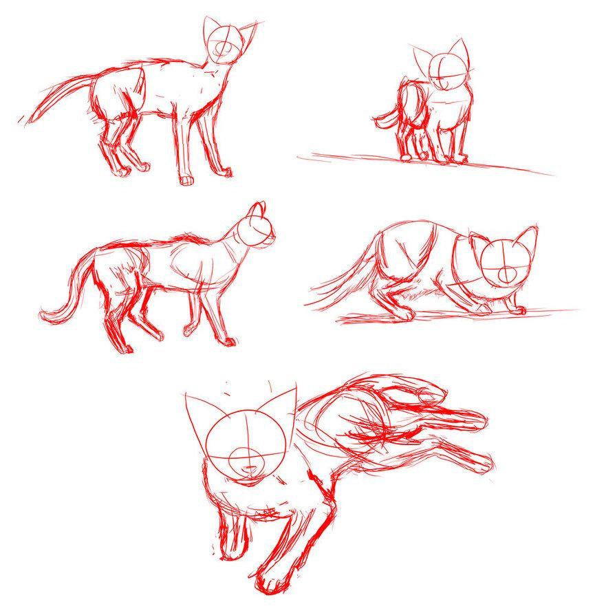 Cat Anatomy by Prawes   cat drawing   Pinterest   Cat anatomy ...