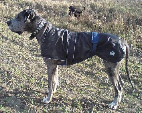 Hundemantel nähen   Projekt Hund   Hunde   Pinterest   Hundemantel ...