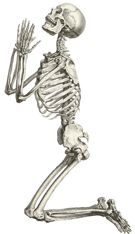 skeleton clip art |     casual skeleton, full skeleton