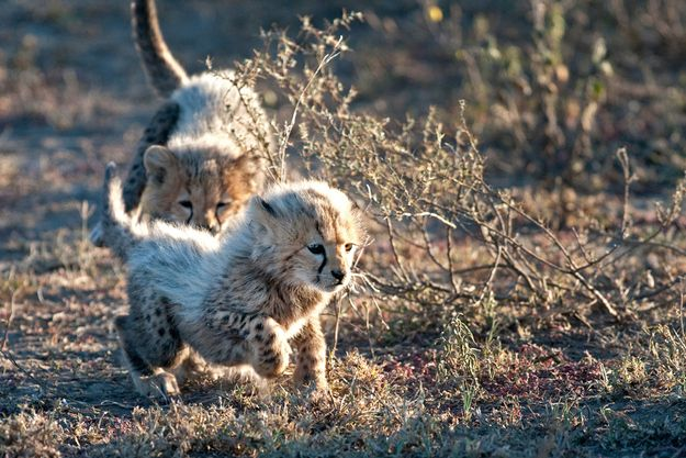 9 Baby Animals You'll Find On An African Safari