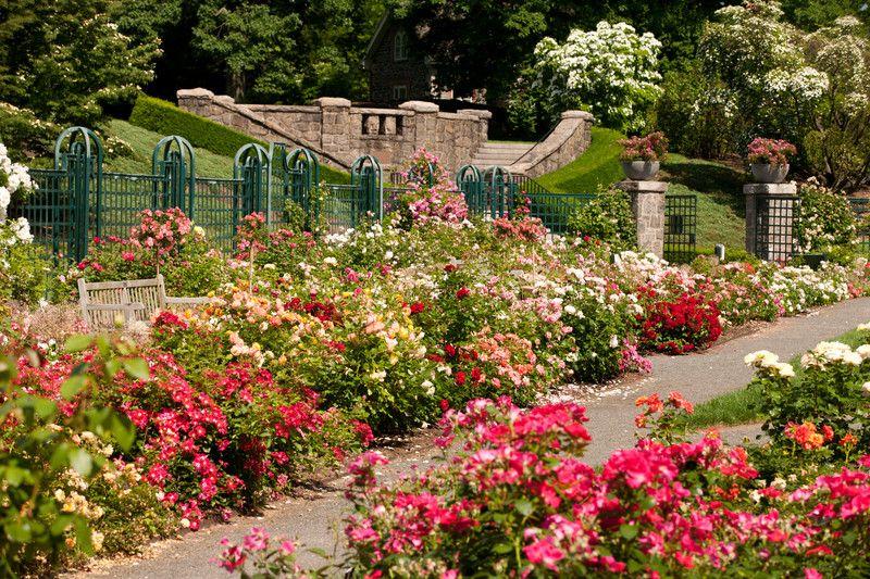 Peggy Rockefeller Rose Garden Nybg