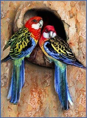 Breeding Rosellas Parakeets | Rosella Birds Australia