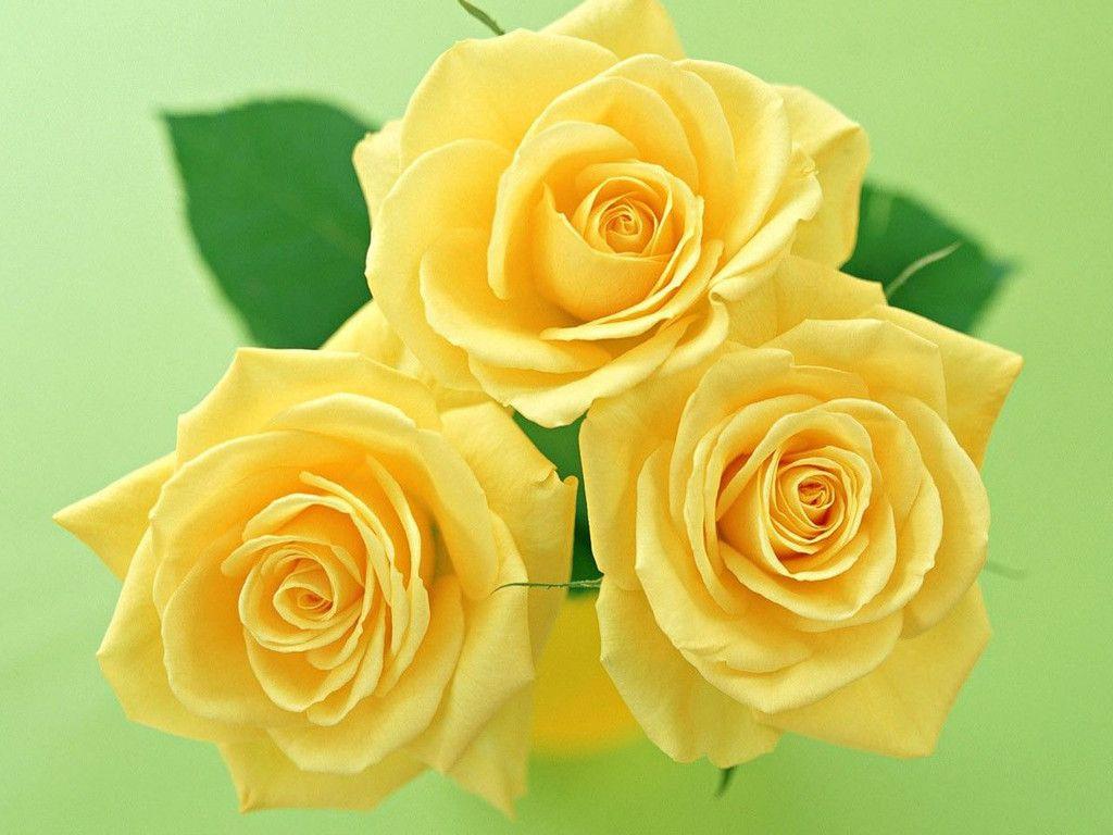 Flower Wallpaper Hd Wallpapers 1024x768 Flowers Yellow
