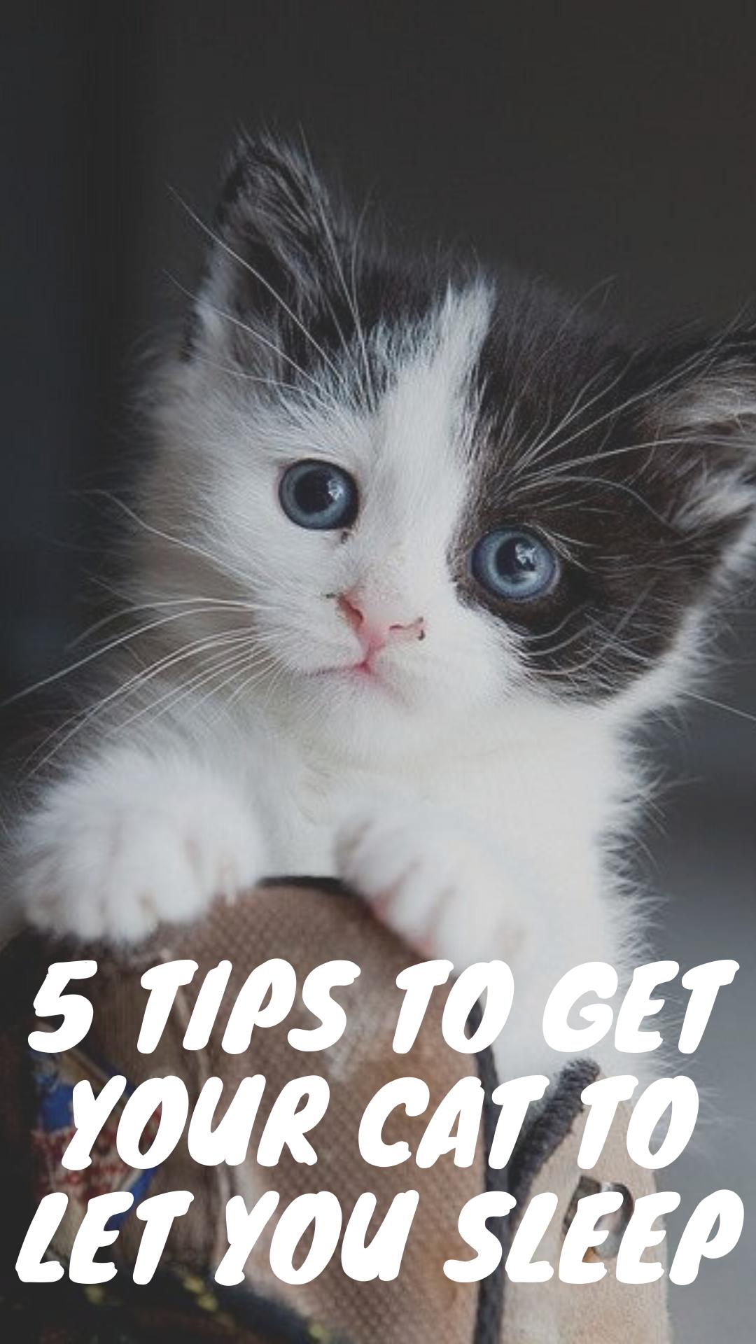 5 Tips To Get Your Cat To Let You Sleep In 2020 Cats Sleeping Kitten Kitten Health