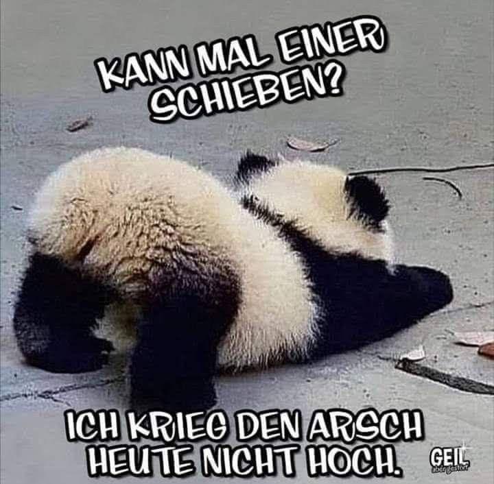 Pin von Heike Wahrn auf Lustige Bilder in 2020   Sprüche ...